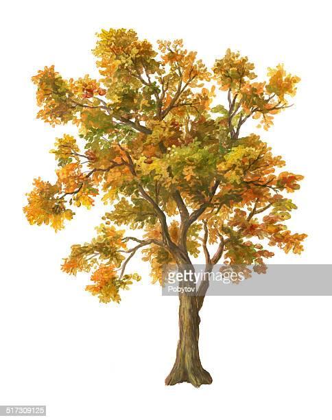 autumn tree isolated on white - tree trunk stock illustrations, clip art, cartoons, & icons
