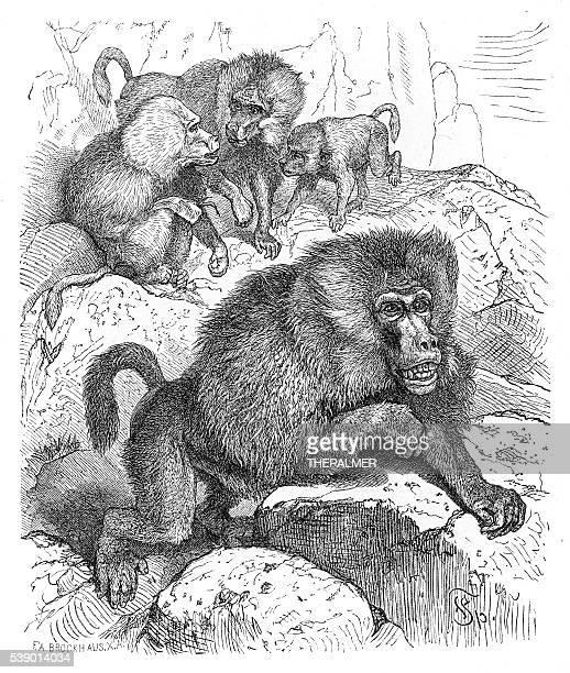 baboons engraving 1882 - mandrill stock illustrations, clip art, cartoons, & icons