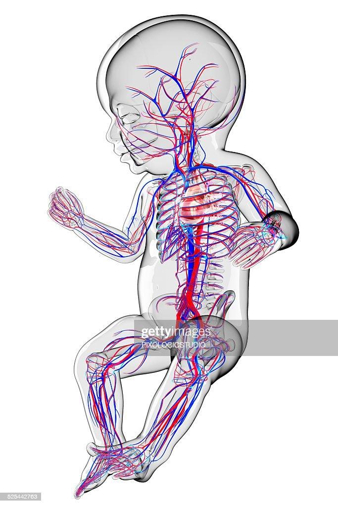 Tolle Anatomy And Physiology Textbook Saladin Zeitgenössisch ...