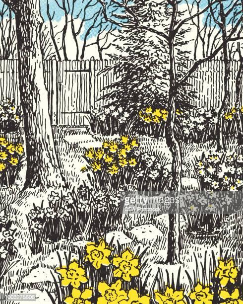 backyard garden with daffodils - daffodil stock illustrations