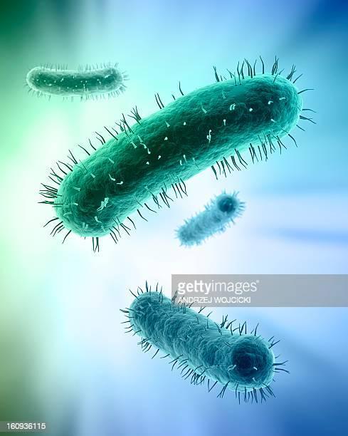 bacteria, artwork - bacterium stock illustrations