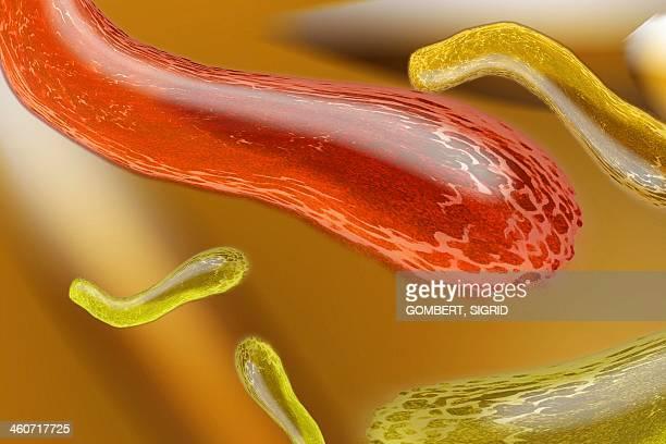 bacteria, artwork - sigrid gombert stock illustrations