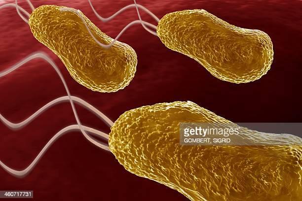 bacteria, artwork - sigrid gombert 幅插畫檔、美工圖案、卡通及圖標