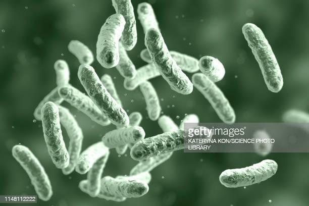 bacteria, illustration - salmonella bacteria stock illustrations
