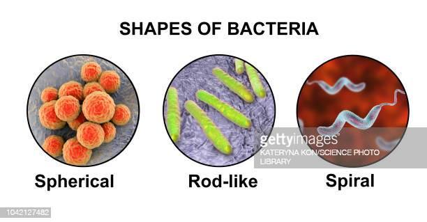 ilustraciones, imágenes clip art, dibujos animados e iconos de stock de bacteria of different shapes, illustration - sifilis