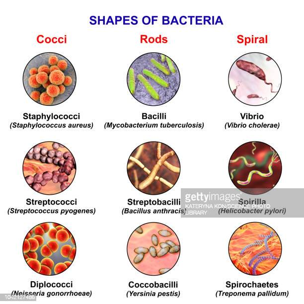 Bacteria of different shapes, illustration