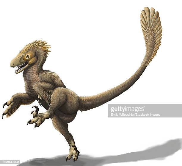 Balaur bondoc, a strange Romanian dromaeosaur, has two sickle claws and only two fingers on its hands.