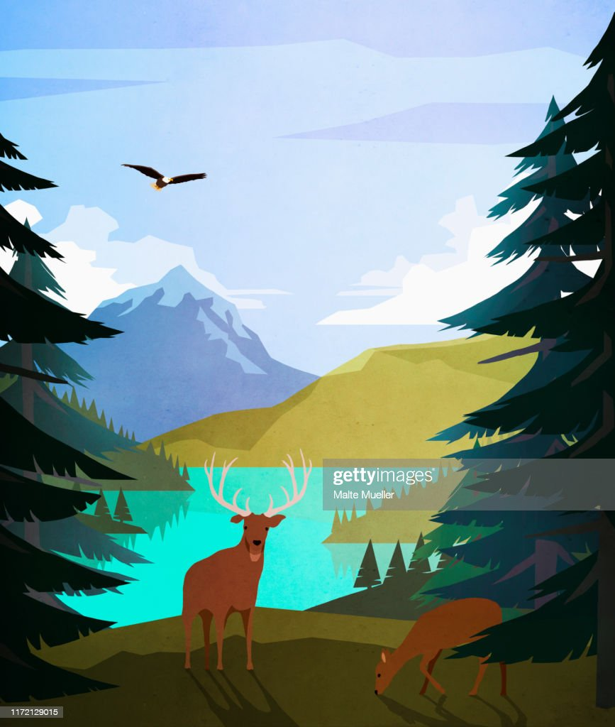 Bald eagle and deer at idyllic, remote lakeside : Stock Illustration