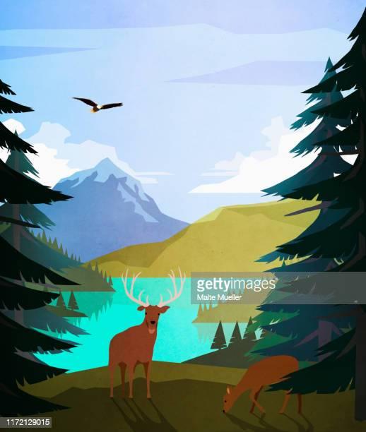 bald eagle and deer at idyllic, remote lakeside - bald eagle stock illustrations