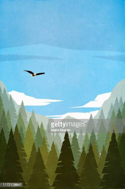bald eagle flying over treetops - silence stock illustrations