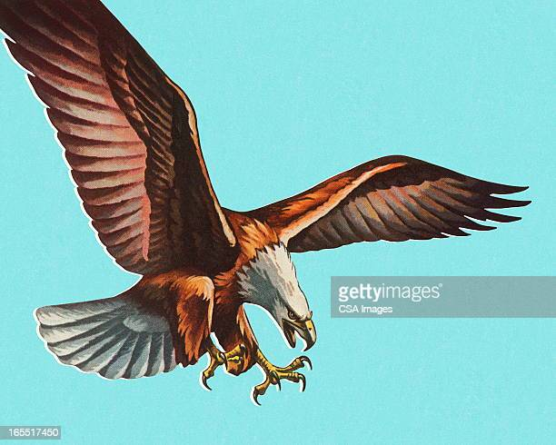 bald eagle - talon stock illustrations
