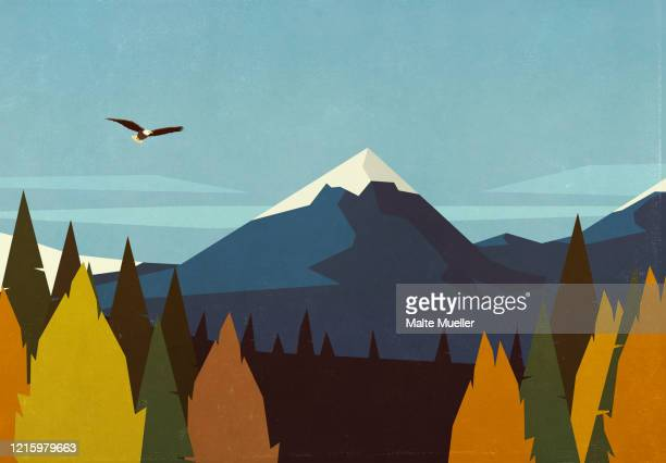 bald eagle soaring over autumn forest and mountain landscape - silence stock illustrations