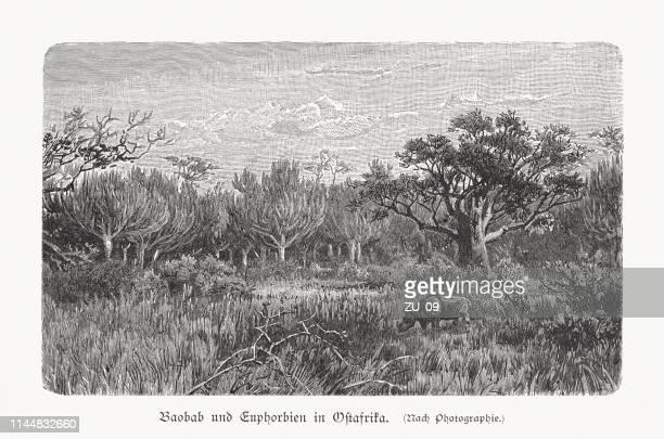 illustrations, cliparts, dessins animés et icônes de baobab et euphorbia en afrique de l'est, gravure sur bois, publiée en 1897 - afrique paysage