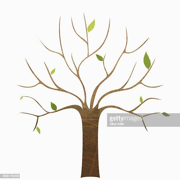 a bare tree against white background - bare tree stock illustrations
