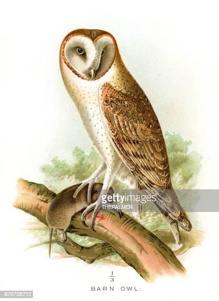 barn owl lithograph 1897 - bird of prey stock illustrations, clip art, cartoons, & icons