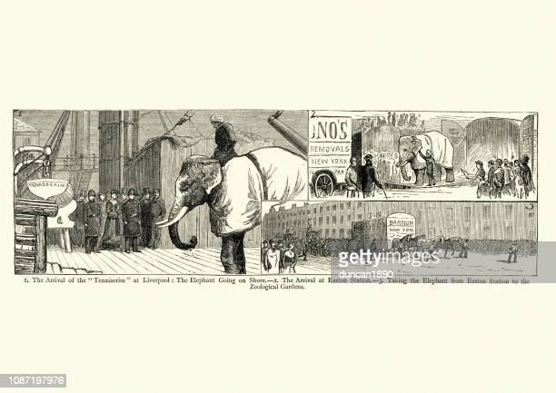ilustraciones, imágenes clip art, dibujos animados e iconos de stock de birmano elefante blanco de barnum, que llegan a inglaterra, 1884 - p.t. barnum