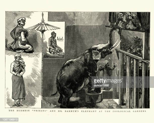 ilustraciones, imágenes clip art, dibujos animados e iconos de stock de elefante de barnum en el jardín zoológico - p.t. barnum