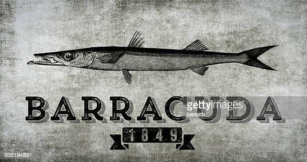 Barracuda 1849