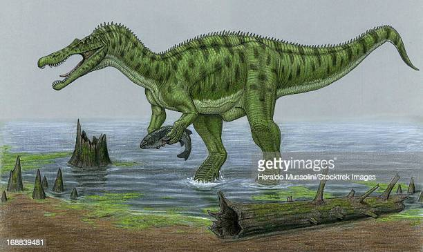 a baryonyx walkeri dinosaur catches a fish as it's next meal. - next stock illustrations