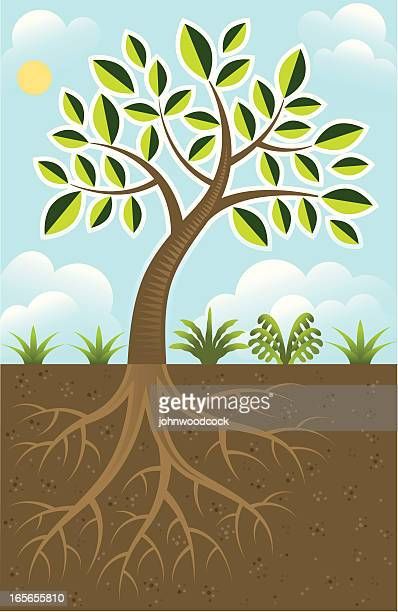 basic tree roots - tree trunk stock illustrations, clip art, cartoons, & icons