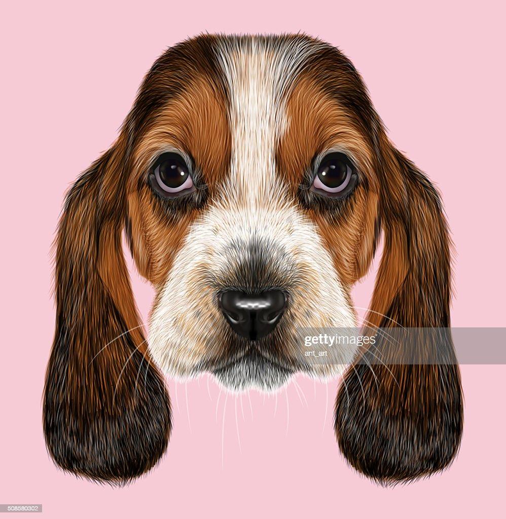 Basset Bracke Hund. : Stock-Illustration