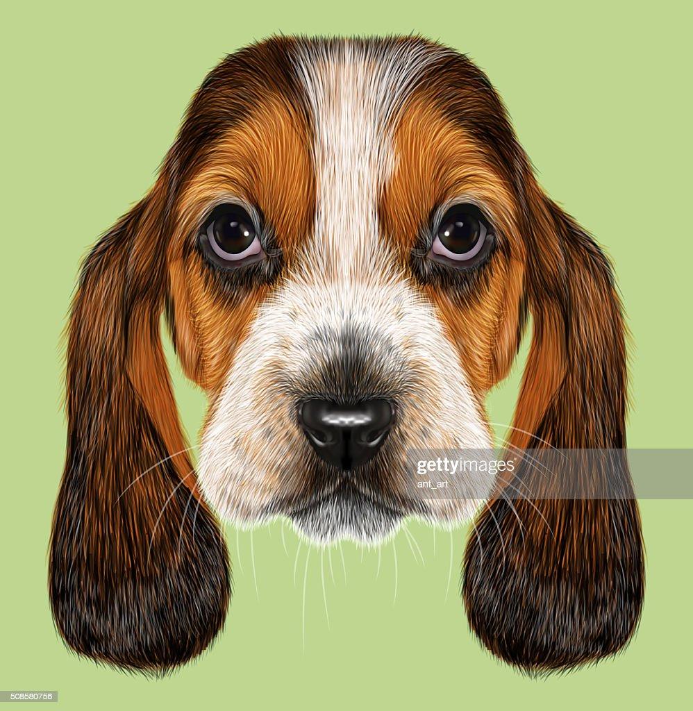 Basset Hound Dog. : Stockillustraties