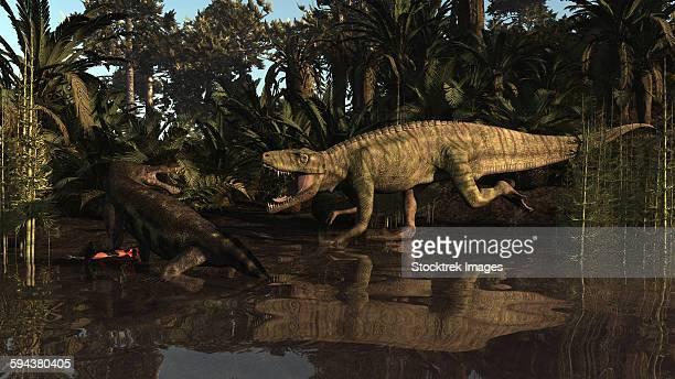 ilustraciones, imágenes clip art, dibujos animados e iconos de stock de batrachotomus confronts a nothosaurus in the triassic period. - triásico
