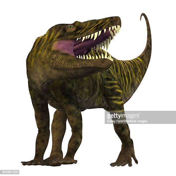 ilustraciones, imágenes clip art, dibujos animados e iconos de stock de batrachotomus roaring, white background. - paleozoología
