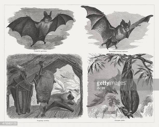 Bats (Chiroptera), wood engravings, published in 1876