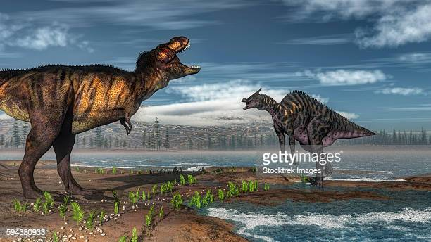 Battle between Tyrannosaurus rex and Saurolophus.