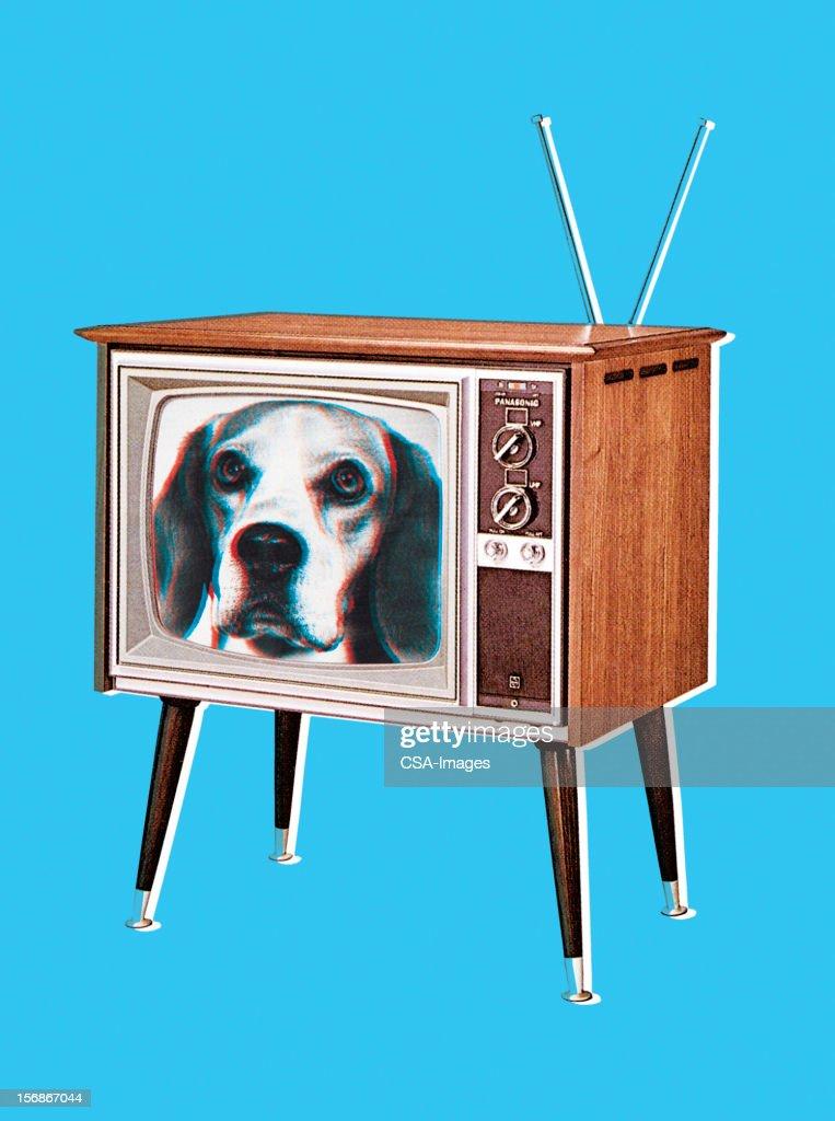 Beagle Dog on TV Screen : stock illustration