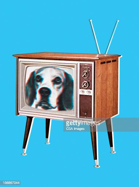 Beagle Dog on TV Screen