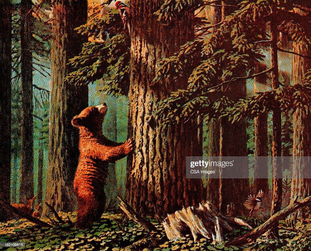 Bear Looking Up Tree : stock illustration
