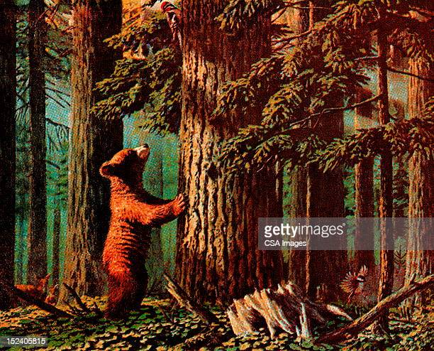 bear looking up tree - tree trunk stock illustrations, clip art, cartoons, & icons