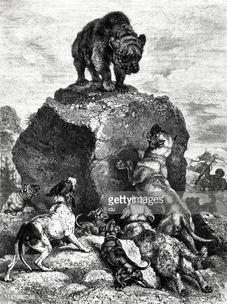 bear on a high stone, escaped from the pack of dogs - pack of dogs stock illustrations