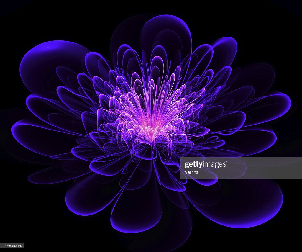 Beautiful Blue And Purple Flower On Black Background Stock