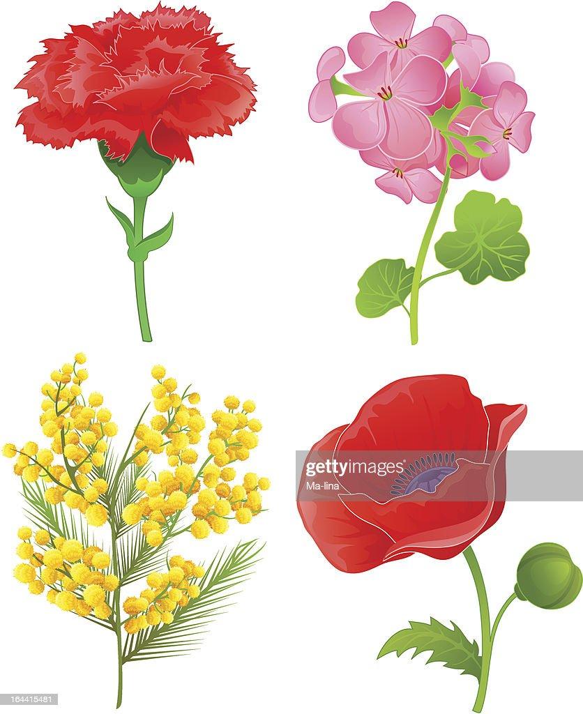 Beautiful flowers set four