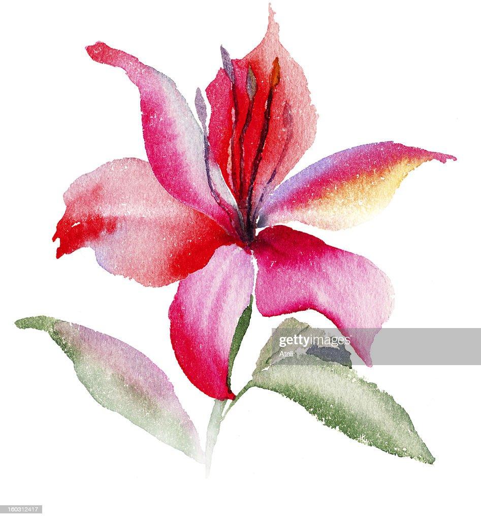Beautiful lily flowers stock illustration getty images beautiful lily flowers stock illustration izmirmasajfo