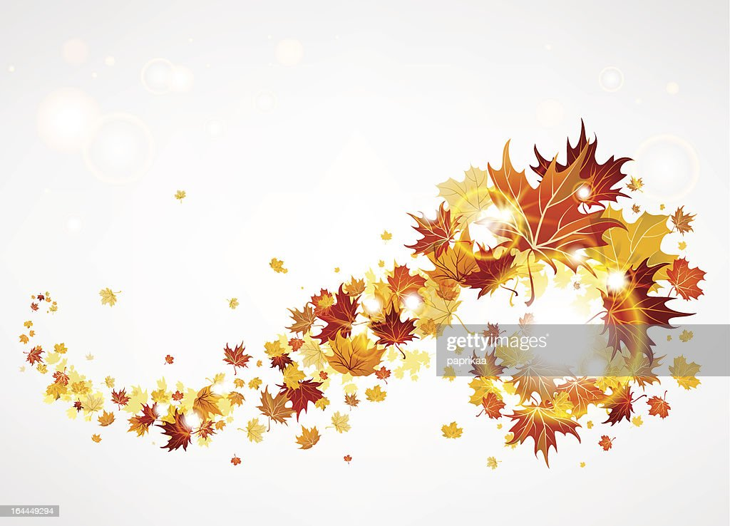 Beautiful swirl of maple leaves
