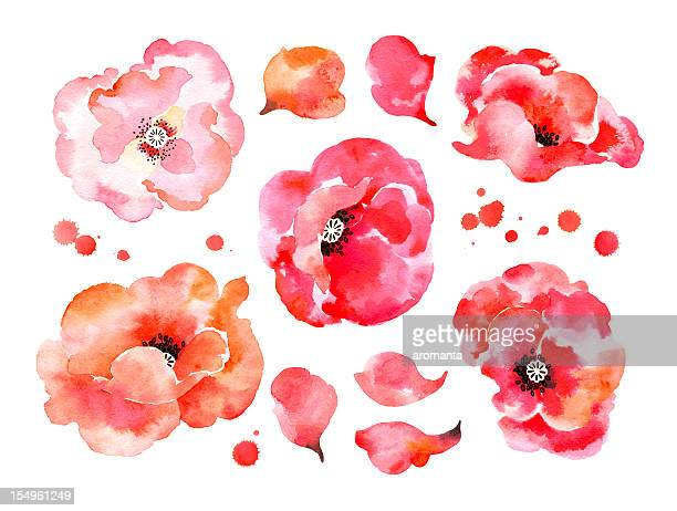 beautiful watercolor poppies - poppy stock illustrations, clip art, cartoons, & icons