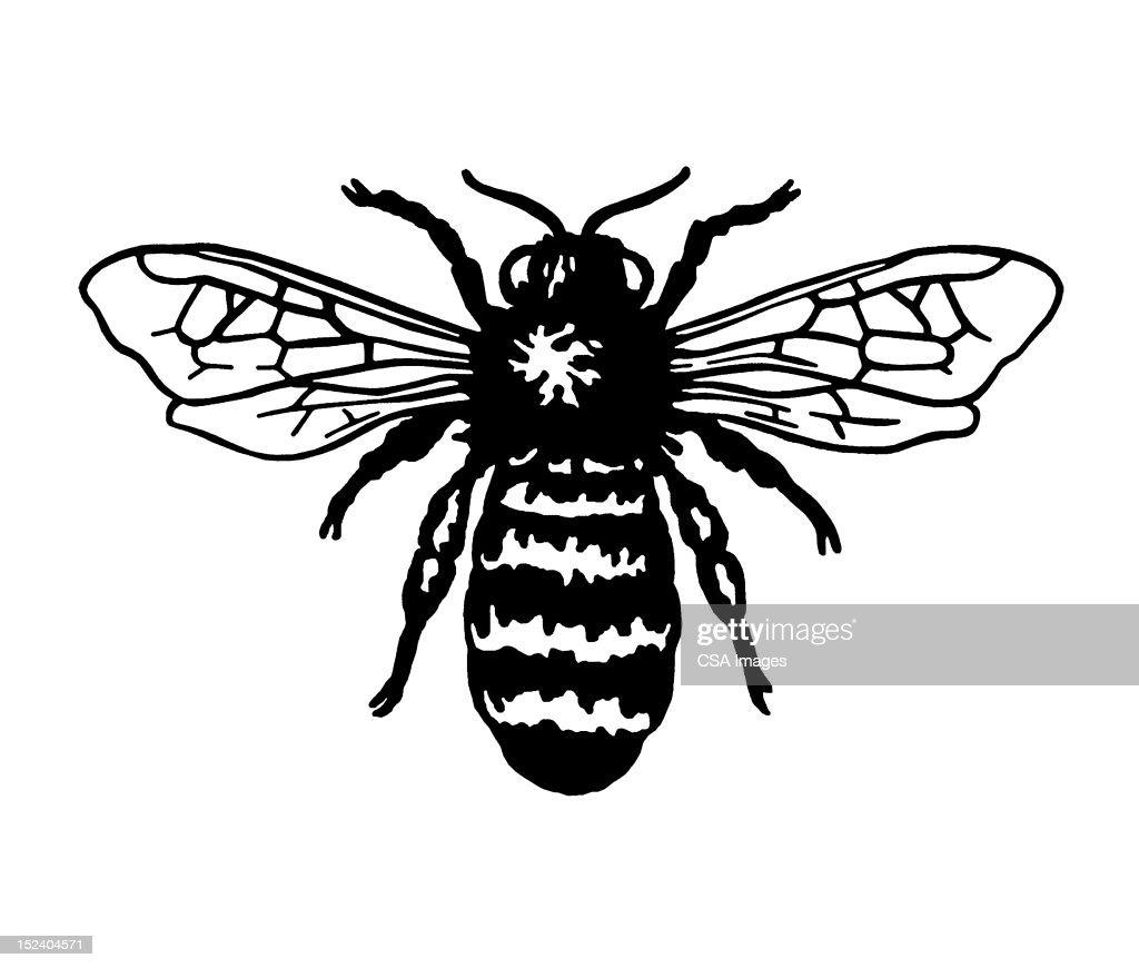 Bee : stock illustration