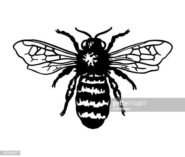 bee - bumblebee stock illustrations, clip art, cartoons, & icons