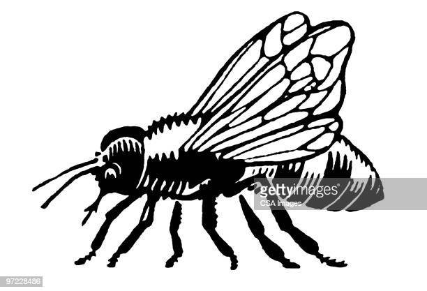 bee - pests stock illustrations