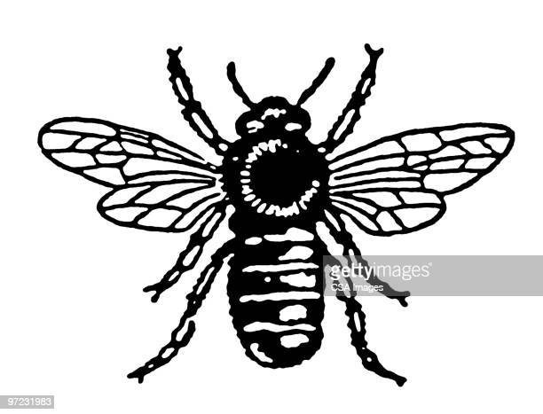 bee - wasp stock illustrations, clip art, cartoons, & icons