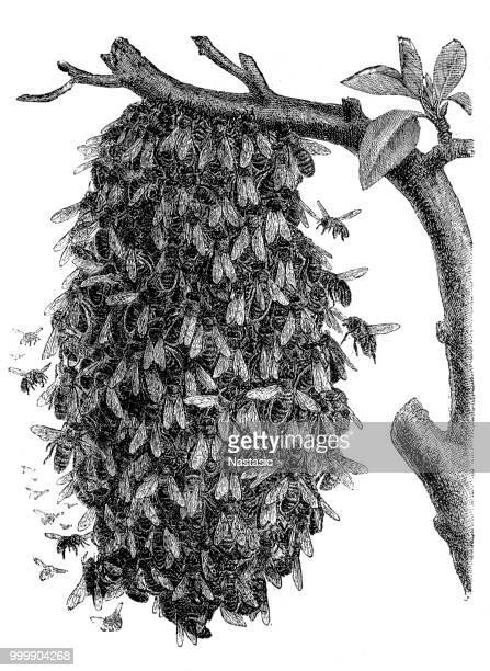 illustrazioni stock, clip art, cartoni animati e icone di tendenza di alveare - nido di vespe