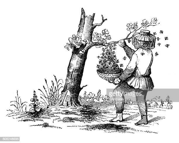 Apicultor Colher de Mel de árvore 1849