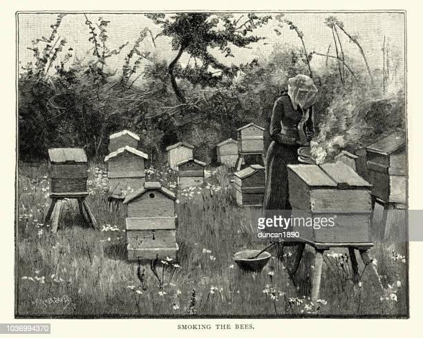 illustrations, cliparts, dessins animés et icônes de apiculture, ruches aux fumeurs féminins apiculteur, xixe siècle - ruche
