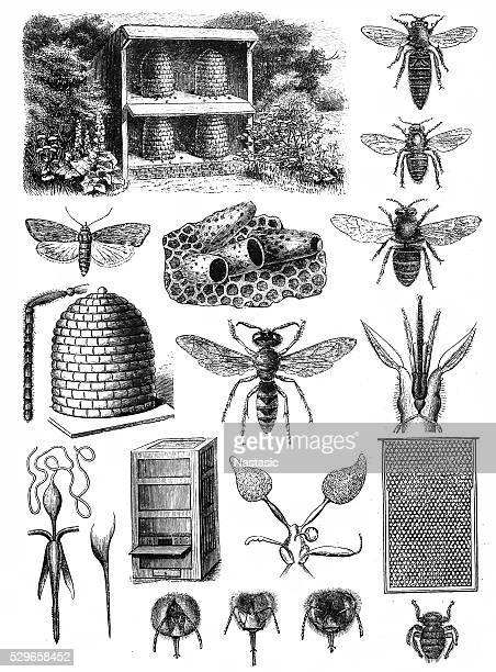 beekeeping - etching stock illustrations
