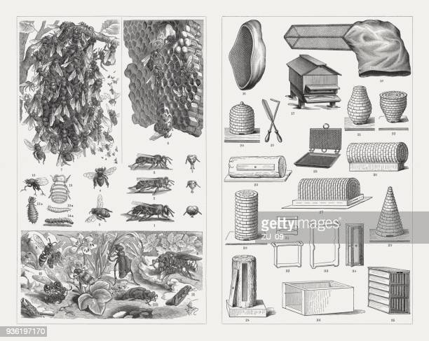 beekeeping, wood engravings, published in 1897 - queen bee stock illustrations