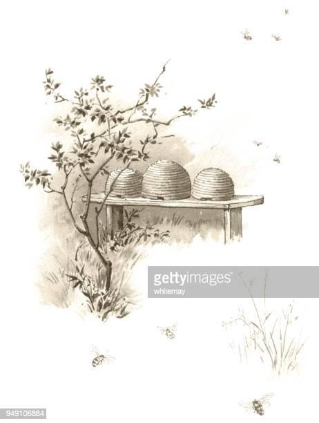 illustrations, cliparts, dessins animés et icônes de abeilles et ruches - illustration victorienne - ruche